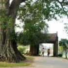 Cây đa và cổng làng (Sưu tầm)